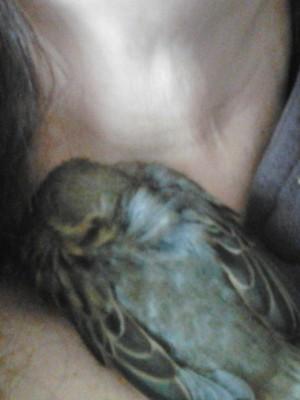 Tweety - Ausruhen von der Nacht in der Freiheit