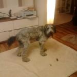 Moritz Fell ist stark verfilzt und er kann sich durch den engen angewachsenen Pullover nicht wirklich frei bewegen.