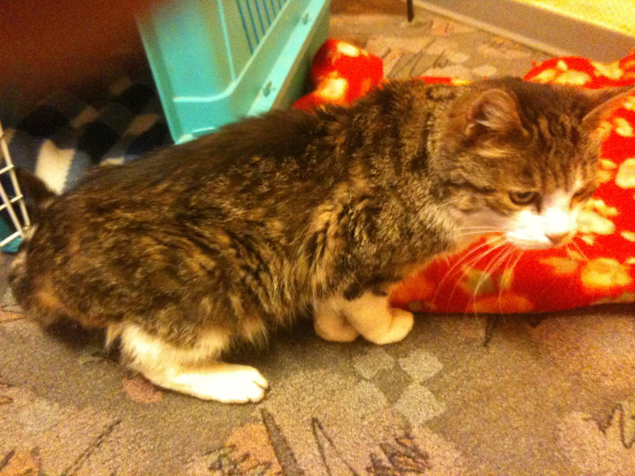 Katze in Wertheim gefunden