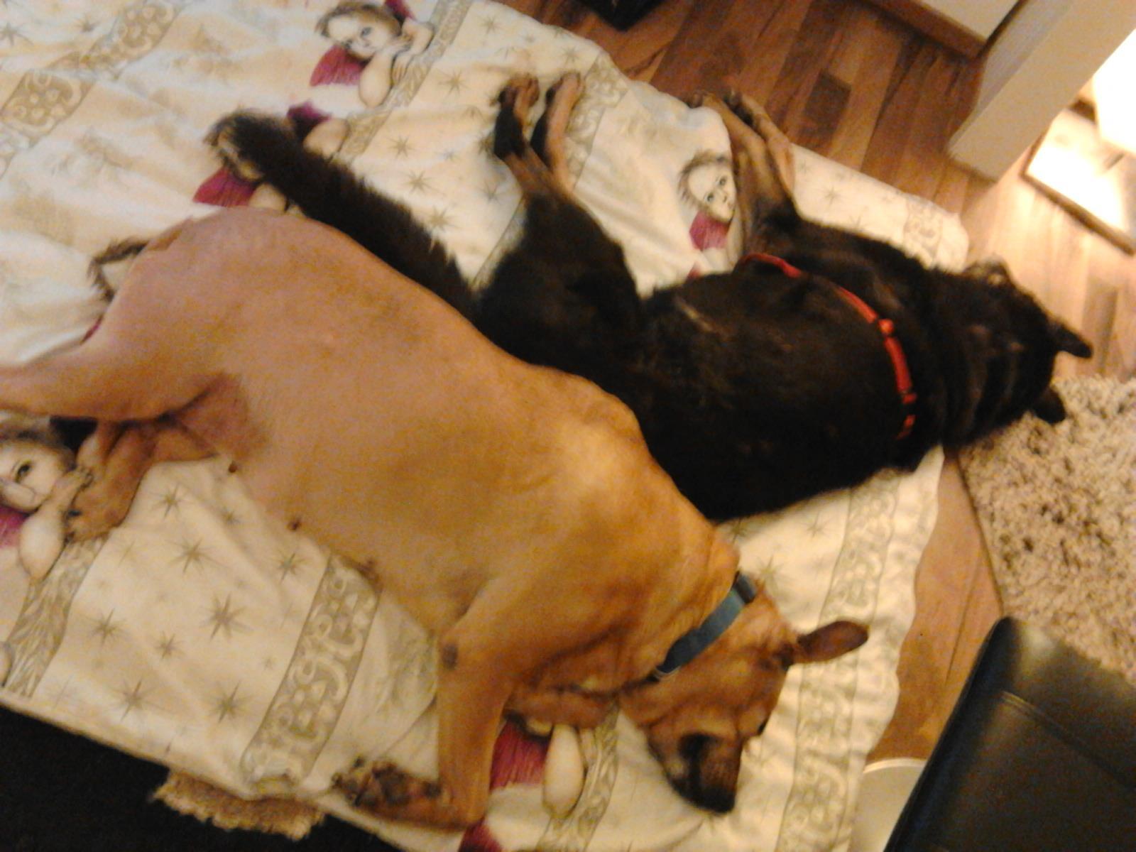 Anka und Trixi schlafen wie die Engel