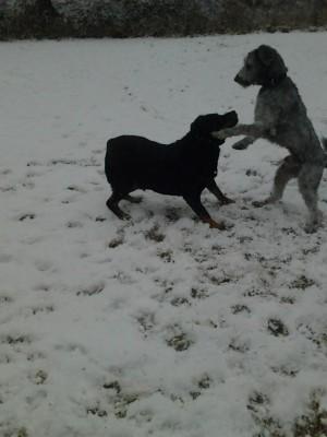 Kimba und Moritz