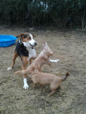 Buster und Filou zu Besuch