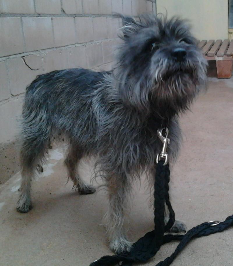 Wer kennt diesen Hund?