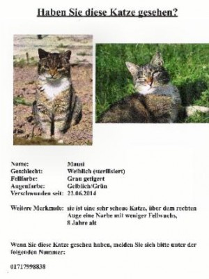 Katze Mausi in Nassig vermisst