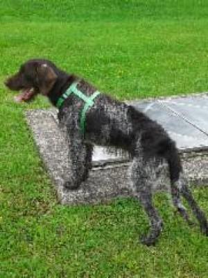 Fundhund Kirchzell