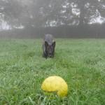 Cleo mit Ball