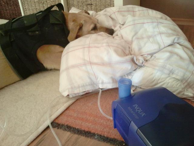 Trixi und die Lungenfibrose
