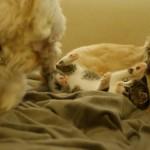 Mia mia Alfred und Ronja mit Kätzchen