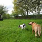 Trixi mit Annabell und Aiko