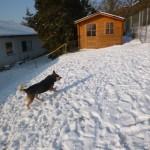 Dino liebt Schnee