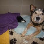 Dingo und seine sterbende Freundin Paulinchen