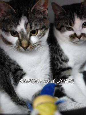 Romeo und Julia haben zusammen ein Zuhause gefunden
