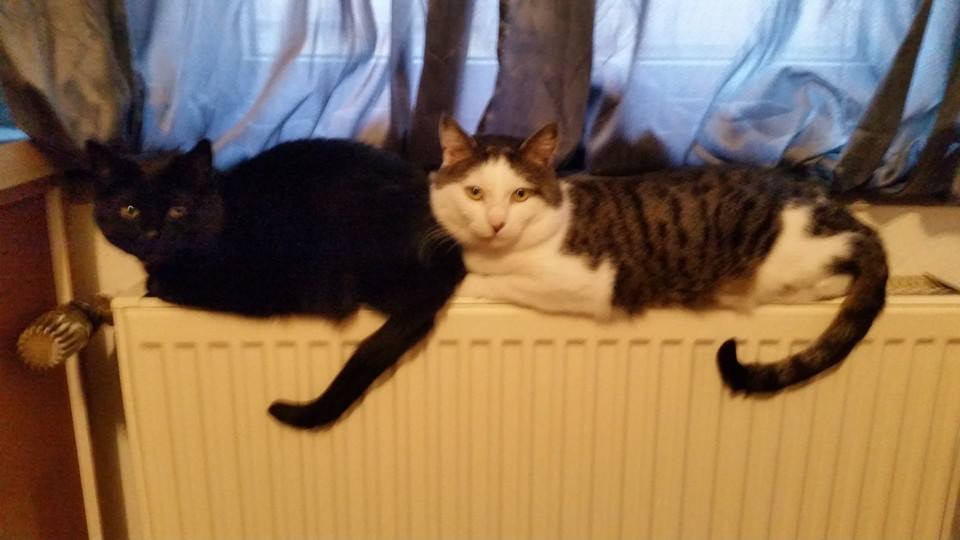 Flecki und Mausi suchen zusammen ein Zuhause