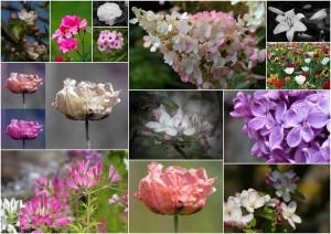 Fotokarten mit Blütenmotiven